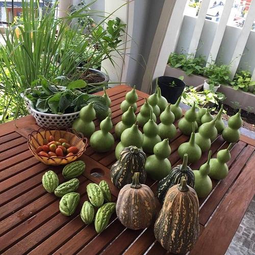 Đã mắt với đống rau quả sau khi thu hoạch