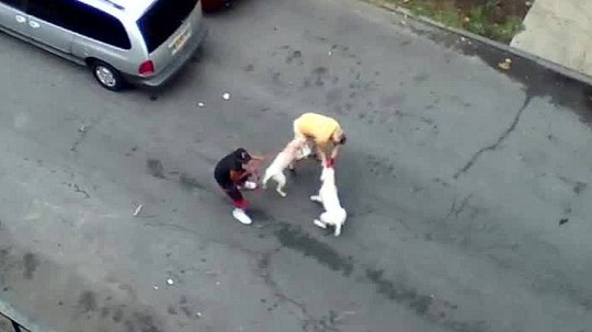 Ông Francesco Bove (áo vàng) bị chó pit bull cắn. Ảnh: CNN