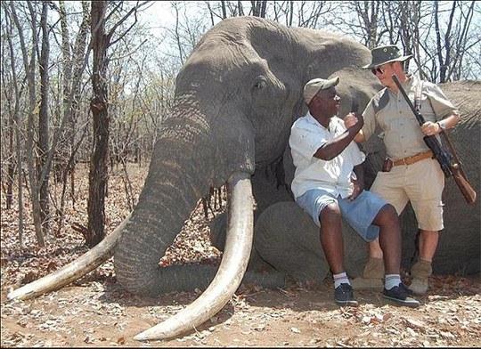 Tay thợ săn Đức bên con voi 40-60 năm tuổi. Ảnh: Daily Mail