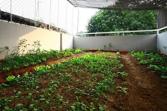Để đảm bảo cho vườn rau này không ảnh hưởng tới ngôi nhà là một hệ thống chống thấm, chống úng công phu với nhiều lớp: Lớp bạt nhựa, lớp xỉ, lớp lưới, lớp sỏi rồi mới đến đất.