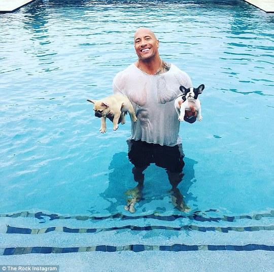 The Rock từng cứu và nhận nuôi hai chú chó