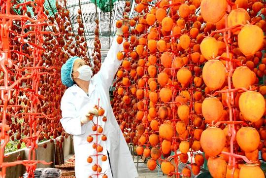 Nông dân Đà Lạt sấy hồng bằng công nghệ Nhật Bản