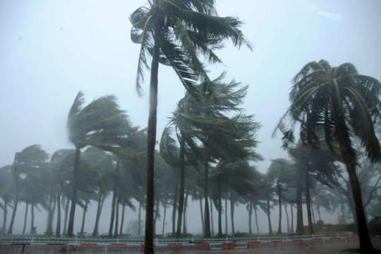 Cây cối nghiêng ngả trong gió bão khi bão Mujigae đổ bộ TP Trạm Giang, tỉnh Quảng Đông - Trung Quốc. Ảnh: REUTERS