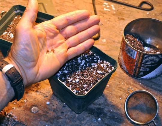 Sau khoảng 30 ngày, bạn lấy hạt đã ngâm ra chuẩn bị gieo.