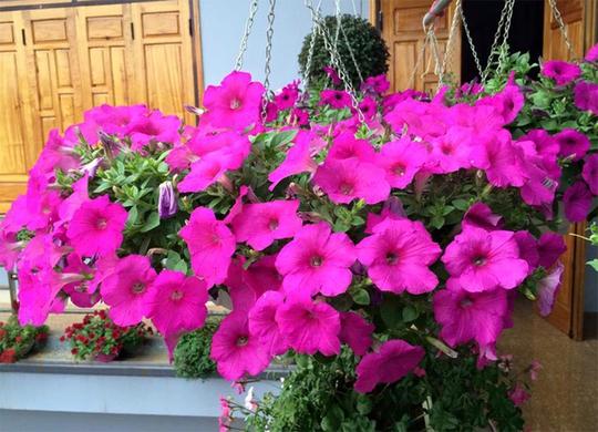 Tầng một của ngôi nhà ông trồng những cây lâu năm như hoa giấy, ngọc bút, hoa hồng. Tầng 2 có hoa thay đổi theo mùa, quanh năm rực rỡ, tầng 3 trồng hoa mẫu đơn.