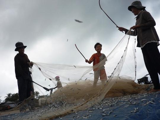 Ngư dân trúng đậm cá cơm