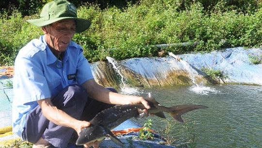 Ông Sơn và con cá tầm 2 kg vớt từ hồ nuôi - Ảnh: Phạm Anh