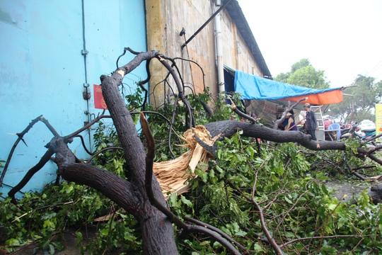 Cây xanh gãy la liệt trên đường Bến Bình Đông (quận 8) sau cơn mưa lớn