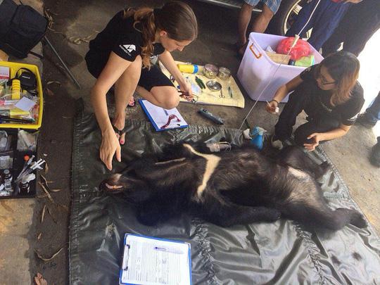 Nhân viên Tổ chức Động vật châu Á chăm sóc gấu Ảnh: Mai Trinh