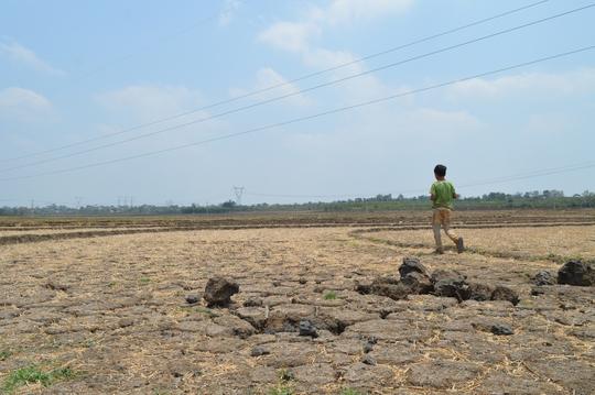 Ngoài cà phê, hạn hán khốc liệt đã đánh chiếm hàng ngàn ha trồng lúa, biến những cánh đồng vốn xanh ngắt thành sa mạc. Trong ảnh: Không có nước, những cánh đồng trồng lúa của người dân ở Gia Lai phải bỏ hoang