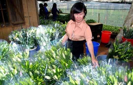 Chị Vũ Thị Phương kiểm tra hoa trước khi xuất đi tiêu thụ. Ảnh: Thạch Thảo.