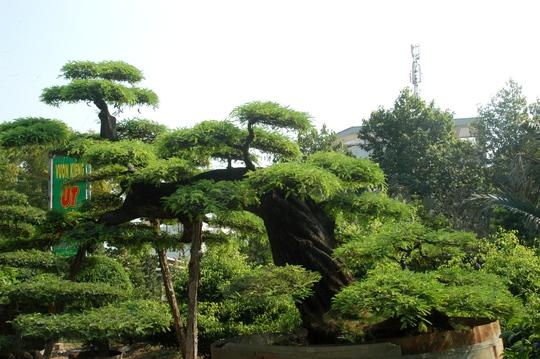 Thế cây nằm ngang, dài hơn 7m