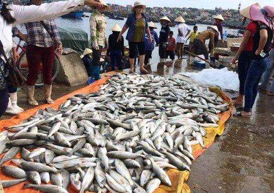 Cá chết trắng lồng được người dân ở Thanh Hóa mang lên bờ