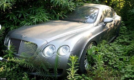 Chiếc Bentleys này bị cây cỏ mọc vây quanh và hết hi vọng gặp lại chủ. Ảnh: CEN