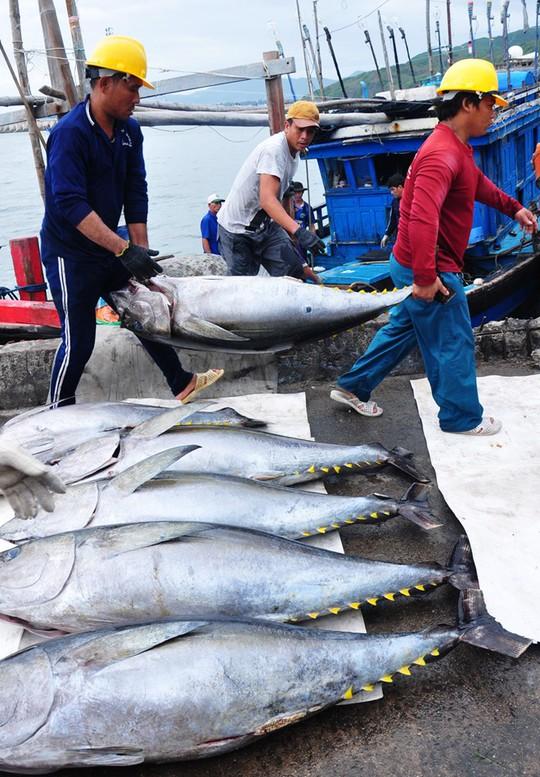 Ngư dân Bình Định đưa cá ngừ từ khoang tàu lên bờ ở cảng biển Quy Nhơn. Ảnh: Minh Hoàng.