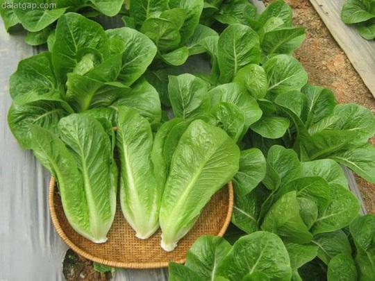 Nhiều người tin rằng rau tự mình trồng luôn là rau sạch. (Ảnh: Internet)