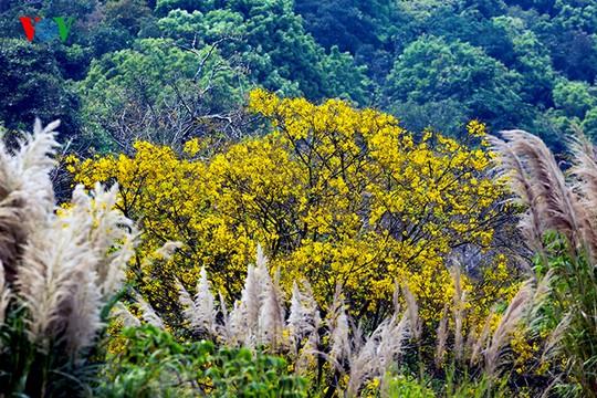 Nhiều du khách nước ngoài đã trầm trồ thốt lên rằng: Sơn Trà đẹp, rất giống rừng ở châu Âu nhưng thú vị hơn vì ở đây có rất nhiều chim, thú, đặc biệt là loài linh trưởng đặc hữu quý hiếm - Voọc Chà vá chân nâu.