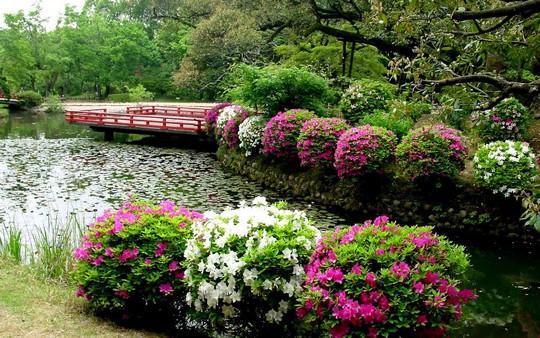 Khu vườn tuyệt đẹp của gia đình bạn
