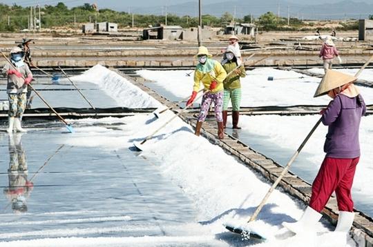 Diêm dân Ninh Thuận đang đối mặt với khó khăn vì giá muối quá thấp