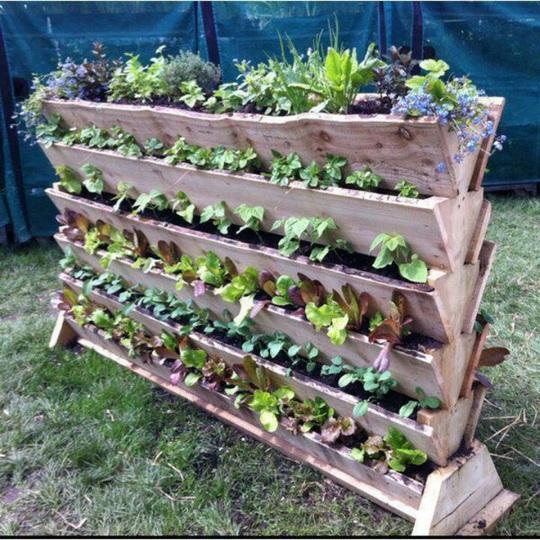 Đây chính là mẫu vườn rau tại gia tuyệt vời cho những gia đình sở hữu không gian khiếm tốn.