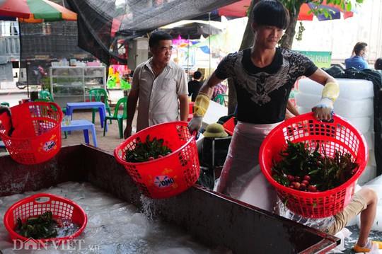 Thương lái Trung Quốc luôn dõi theo mọi công việc tại điểm thu mua của mình.