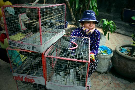 Chúng lại bị bắt trở lại lồng để tiếp tục bán. Những chú chim này sẽ yếu dần và chết rũ xương ở trong lồng.