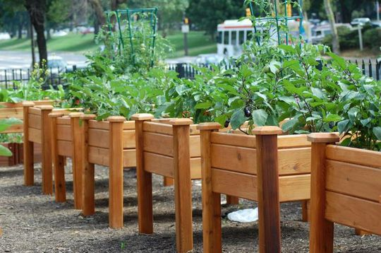 Hơn nữa, bạn còn có thể trồng mỗi giống cây trồng trong từng chậu khay nhỏ khác nhau.