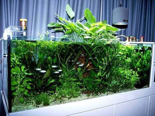 Bể cá không chỉ đẹp mà còn là yếu tố phong thuỷ cho ngôi nhà