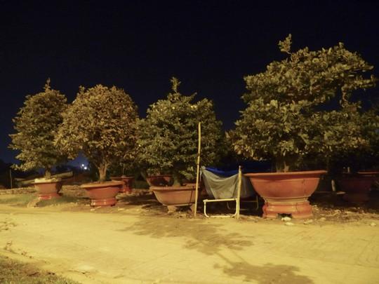Do những gốc mai được bày bán đều thuộc dạng đắt tiền. Có những chậu hơn chục triệu đồng nên bắt buộc nhà vườn phải cho thợ canh ngày đêm