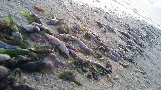 Cá chết hàng loạt trên đảo Thị Tứ. Ảnh: KALAYAAN ATIN TO