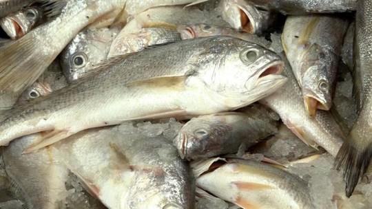 Cá đù vàng được cho là đã biến mất khỏi vùng biển của Trung Quốc. Ảnh: BBC