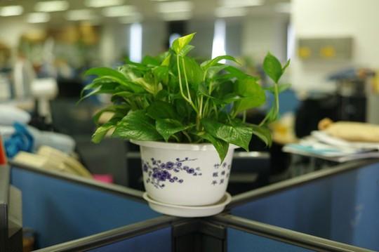 Những phụ kiện hút tài lộc cho bàn làm việc