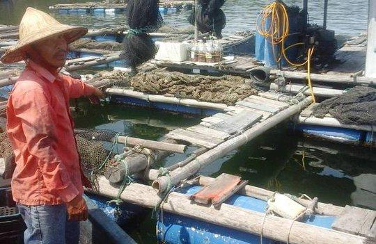 Ông Đồng Văn Tuân, ngụ xã Nghi Sơn, thẫn thờ bên những lồng cá chết trống trơn