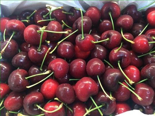 Chi số tiền lớn để mua 1 kg cherry nhưng người tiêu dùng không thể xác định được nguồn gốc, xuất xứ của loại quả này. Ảnh: H. Thảo