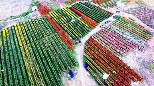 Về cánh đồng hoa đẹp như tranh vẽ giữa Sài Gòn