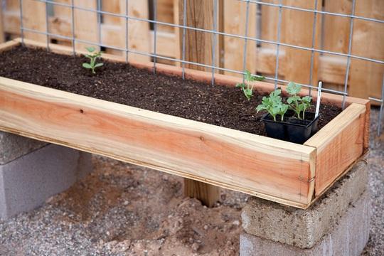 Lượng pallet bạn cần dùng cũng tương ứng với thời kì và loại rau củ mà bạn đang trồng.