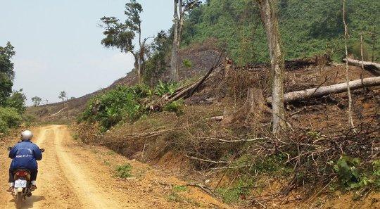 Ông Phạm Văn Kỷ, cán bộ lâm trường, bên một khoảng rừng do đơn vị quản lý bị chặt phá