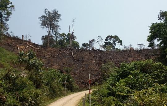 Những khoảng rừng bị hủy hoại chằng chịt tại huyện Kon Plong