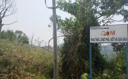 Dù gắn biển cấm nhưng người dân đã phá hủy hết rừng, trồng cây lương thực lên cao ngút