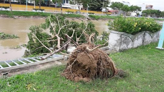 Cây ngã đổ ở Đà Nẵng (ảnh Hoàng Dũng)