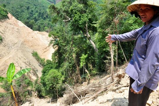 Nhiều cây rừng bị đốn hạ. Ảnh: T.Trực