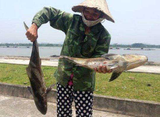 Nguyên nhân cá chết ở cửa Lạch Bạng, huyện Tĩnh Gia (Thanh Hóa) bước đầu được xác định do tàu thuyền ra vào cầu cảng Lạch Bạng gây ra