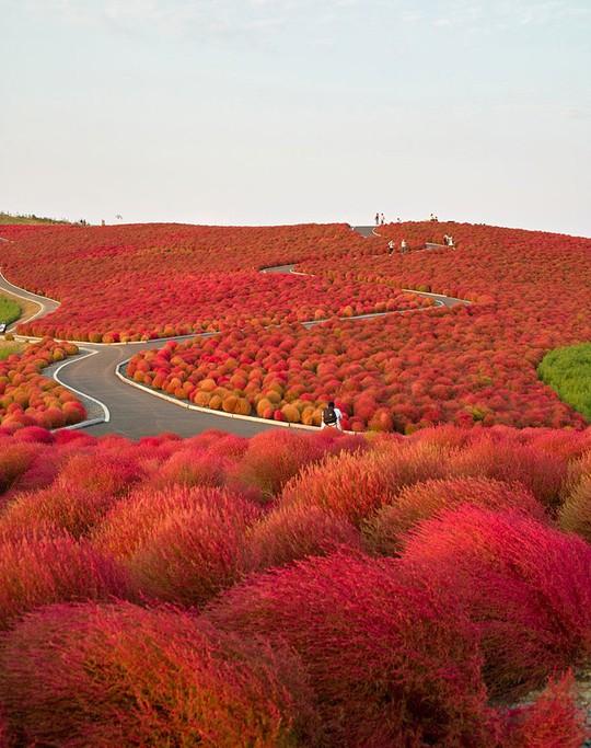 15 lý do khiến bạn muốn đi Nhật ngay lập tức