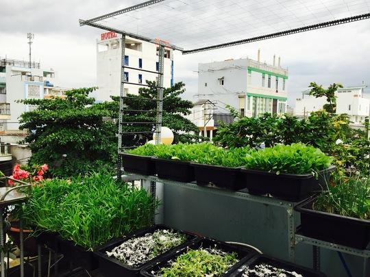 Nửa năm trôi qua, đến nay vườn rau nhà hot girl Bích Diệp đã thu hoạch được rất nhiều loại rau và cây đã cho trái.