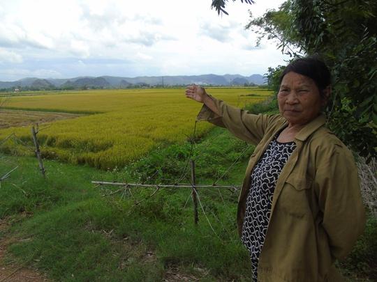 Cánh đồng xã Quảng Trường, nơi xảy ra vụ hành hung các thợ gặt
