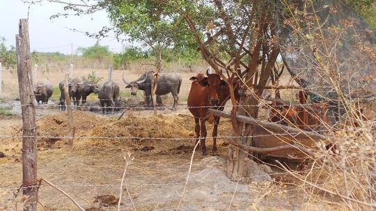 Dự án Sài Gòn Safari treo đã 10 năm nay, đất đai bỏ hoang lãng phí, người dân không làm gì được.
