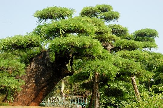 Cây nặng hơn 2 tấn được nghệ nhân Út Tấn dùng nhiều cây gỗ làm bệ đỡ.