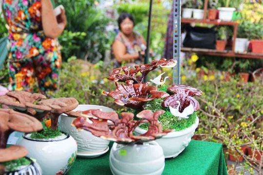 Lần đầu tiên xuất hiện trên thị trường Tết, kiểng bonsai linh chi chỉ có 600 chậu