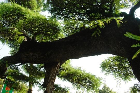 Thế long giáng là ngực nằm trên mặt chậu đầu chúi xuống, cành nhánh làm mây bao lấy chân thoát ẩn thoát hiện một cách tự nhiên.