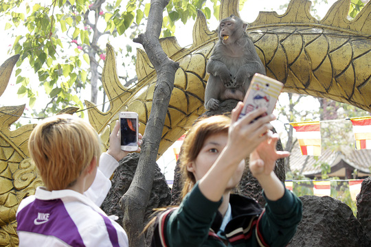 Nhiều người tranh thủ chụp ảnh với đàn khỉ để làm kỉ niệm.